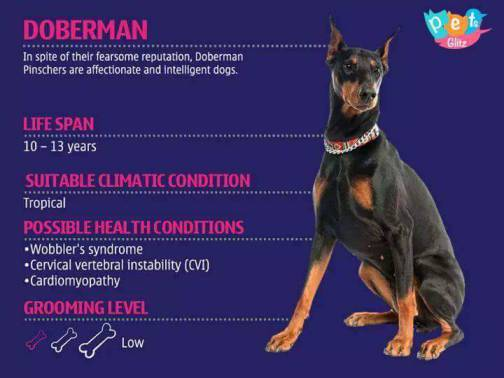 Types of Dogs -1