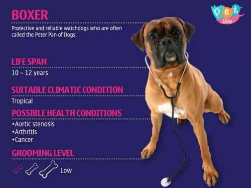 Types of Dogs -12