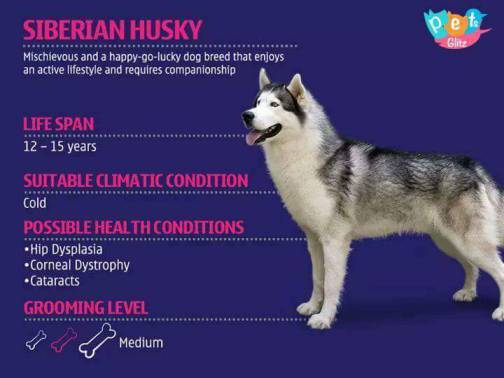 Types of Dogs -14
