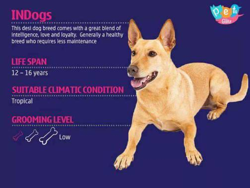 Types of Dogs -15