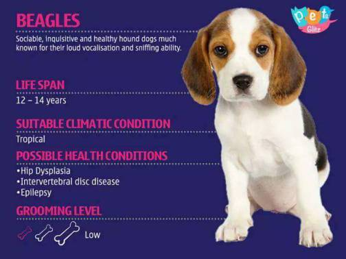 Types of Dogs -16