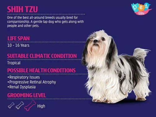 Types of Dogs -17