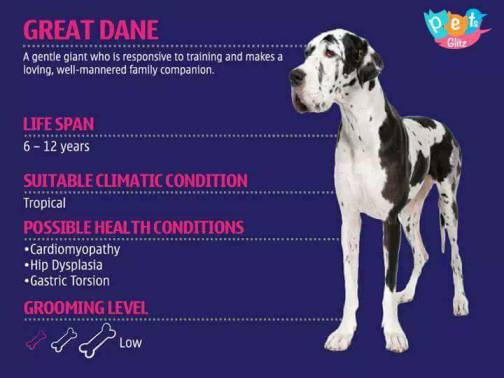Types of Dogs -18