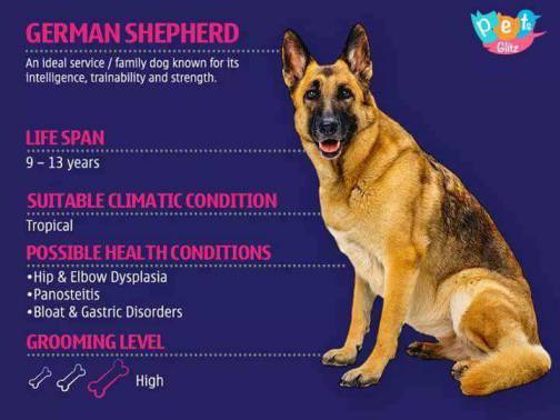 Types of Dogs -5