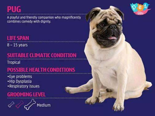 Types of Dogs -6