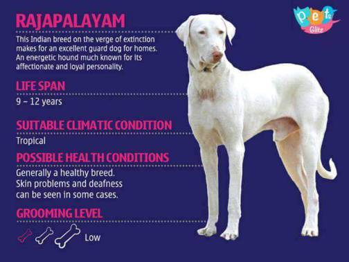 Types of Dogs -7