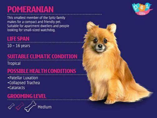 Types of Dogs -9