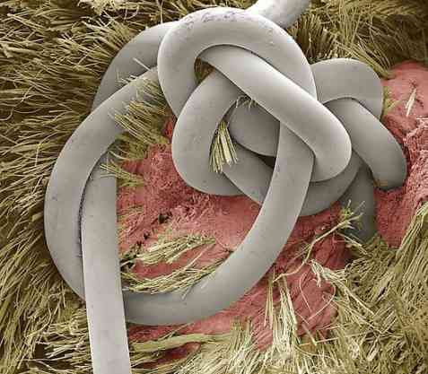 SEM-Scanning-Electron-Microscopic-Images-7