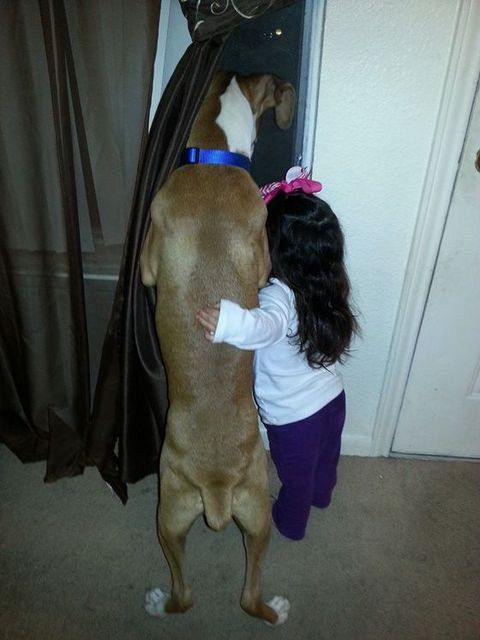 Dogs Are Best Friends (5)