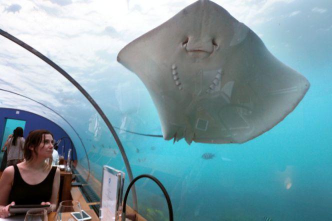 First-Underwater-Restaurant-Ithaa-7