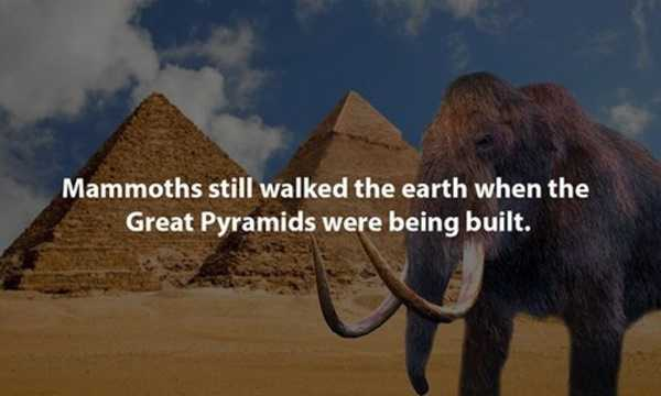 Interesting-Facts-8