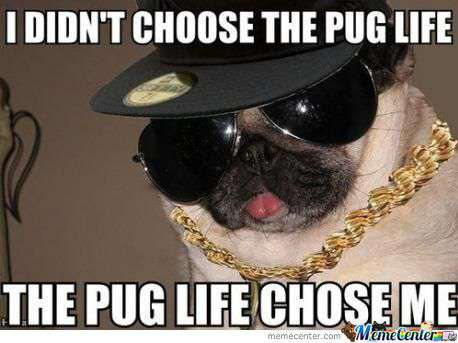 Pug Meme (8)