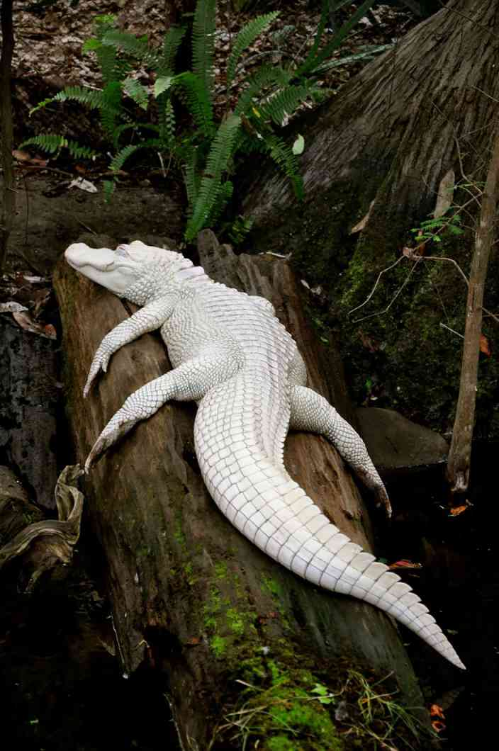 Rare Albino Animals That Don T Need Colors To Look Cool