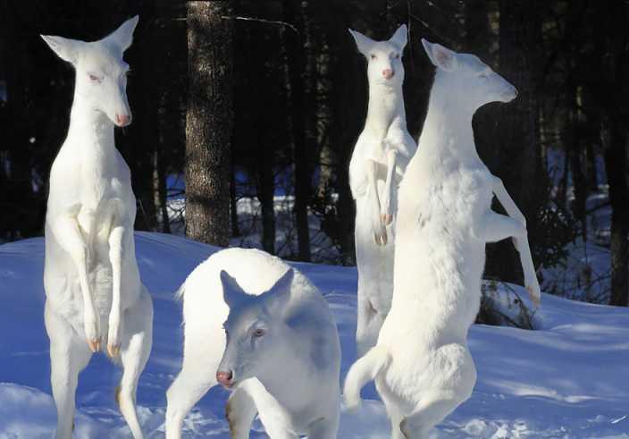 Albino Animals (2)