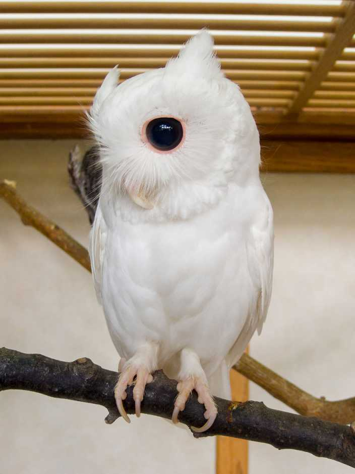 Albino-Animals-9