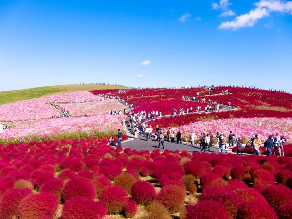 Amazing-Most-Beautiful-Places-In-The-World-Hitachi-Seaside-Park-Japan