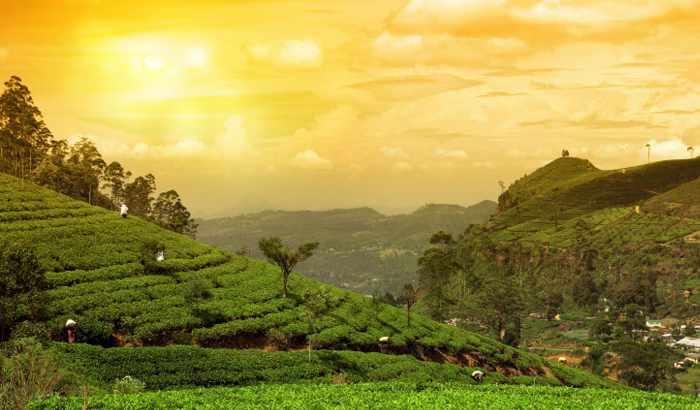 Amazing Places In India Tea Garden Munnar
