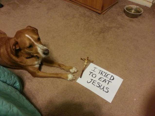 Best Dog Shaming Pics (11)