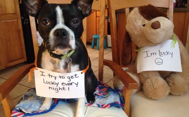 Best Dog Shaming Pics (12)
