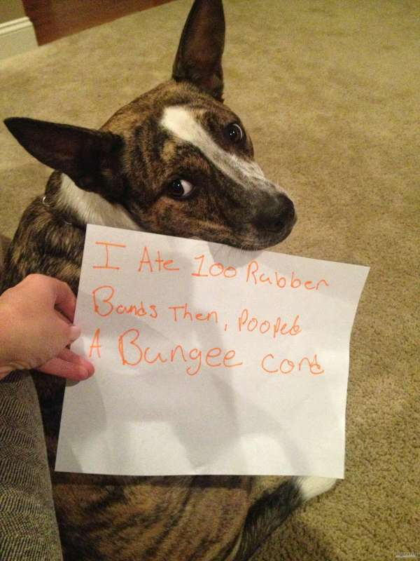 You Will Die Laughing After Seeing These Dog Shaming Pics