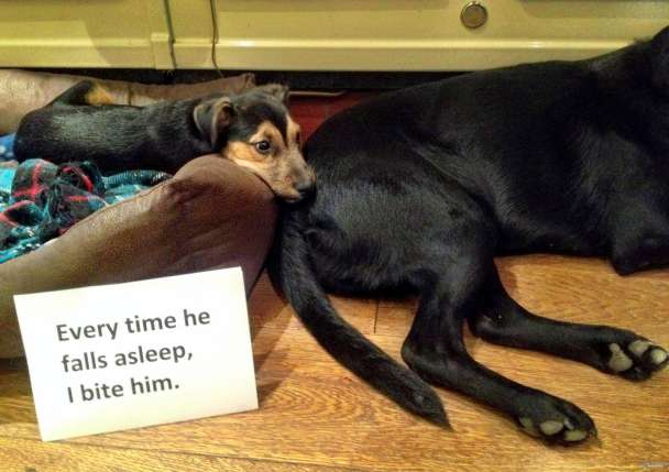 Best Dog Shaming Pics (4)