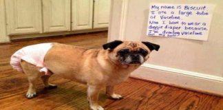 Best Dog Shaming Pics (6)