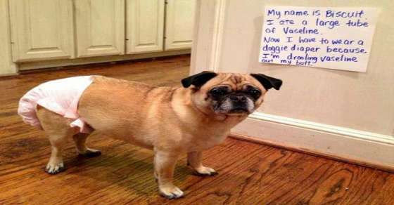 Best Dog Shaming Pics (6)