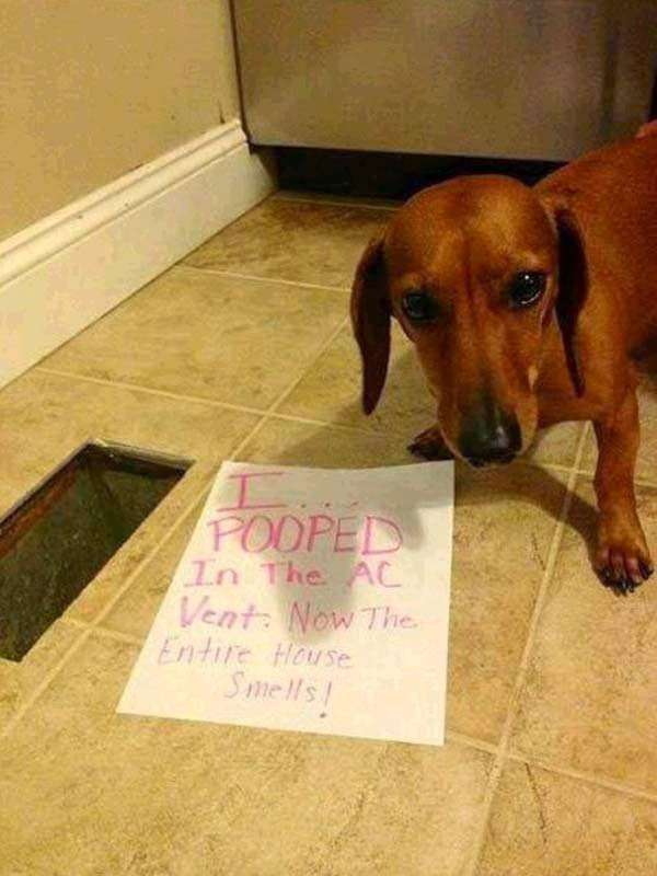 Best Dog Shaming Pics (7)