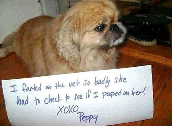 Best-Dog-Shaming-Pics-8