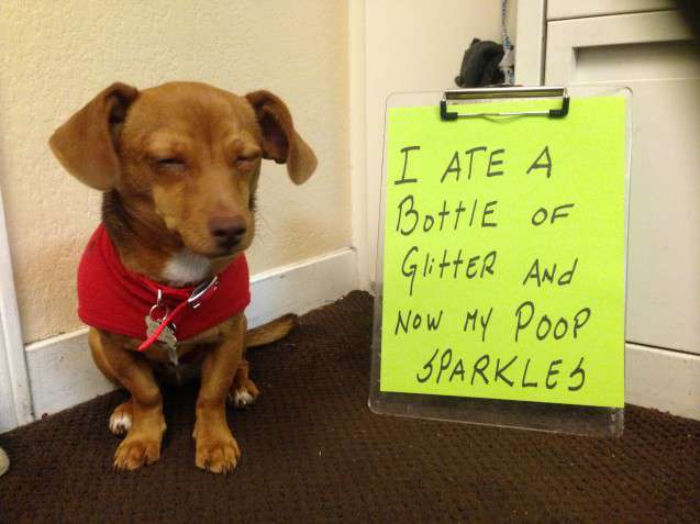 Best Dog Shaming Pics (9)
