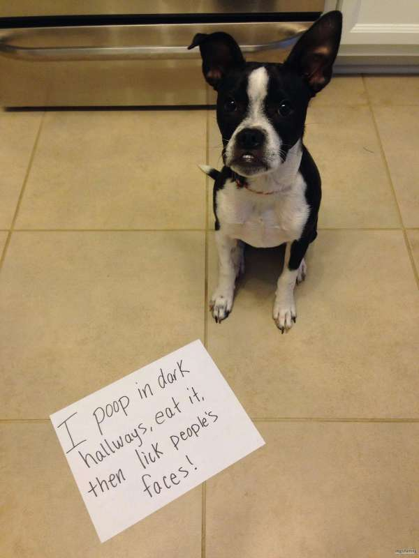 Best Dog Shaming Pics