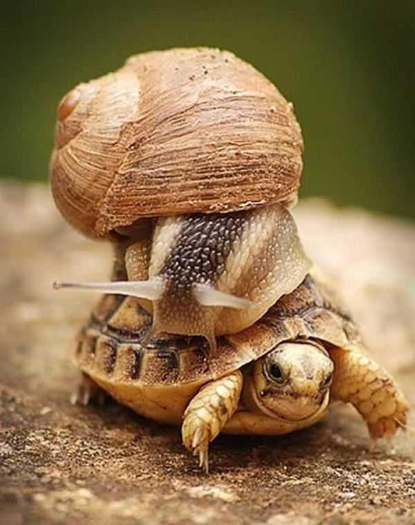 Funny-Hilarious-Lazy-Animals-tortoise