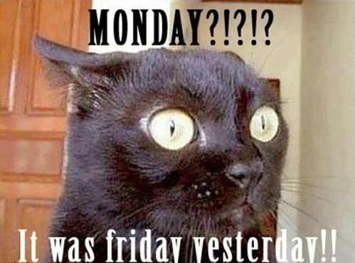 Hilaruois Funny Monday Memes Images (6)
