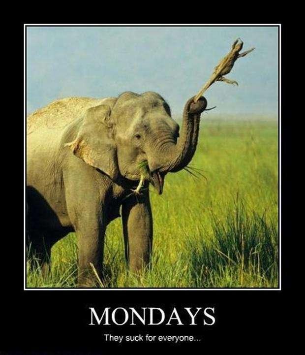 Hilaruois Funny Monday Memes Images (8)