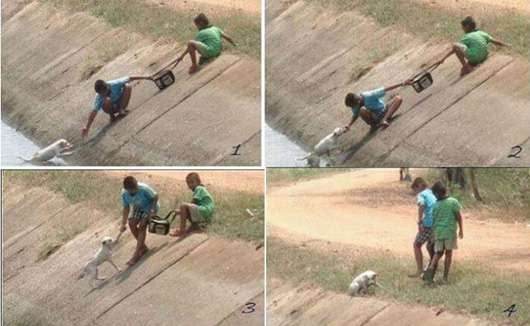 restore faith in humanity (13)