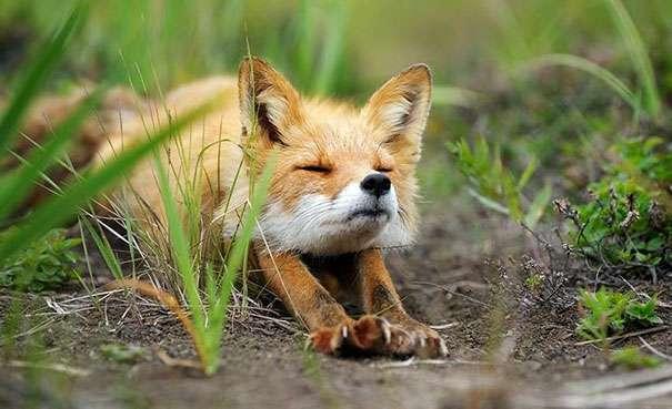 Animals Doing Yoga Poses (10)