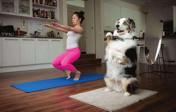 Animals Doing Yoga Poses (11)