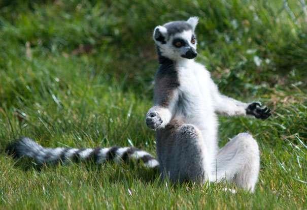 Animals Doing Yoga Poses (3)