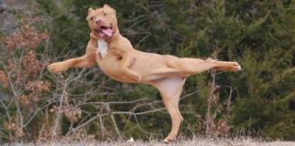Animals Doing Yoga Poses (5)