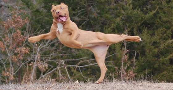 These Animals Doing Yoga Poses Are Too Funny To Handle By Humans