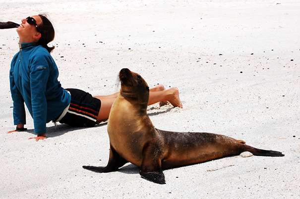 Animals Doing Yoga Poses (9)