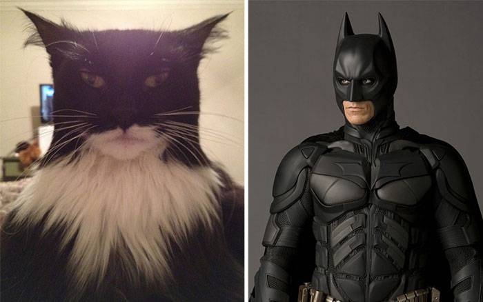 Cartoon-Look-Alikes-Batcat