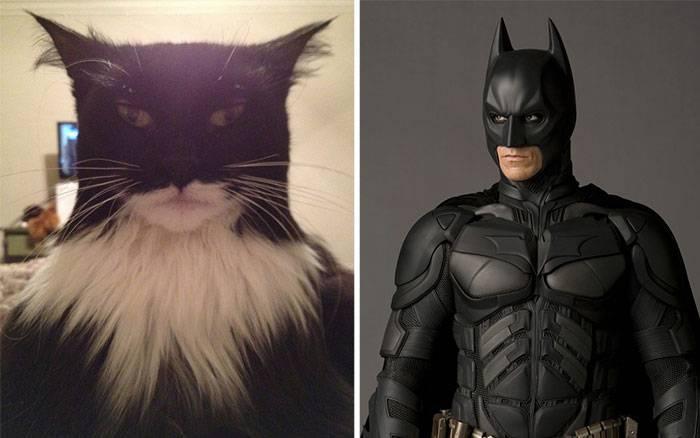 cartoon-look-alikes-batcat