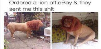 Funny Ebay Fails