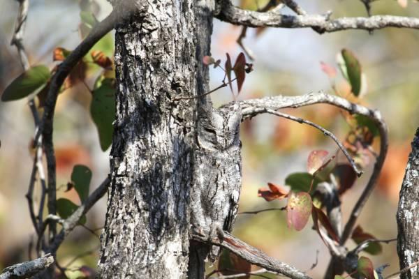 spot-the-owl-4