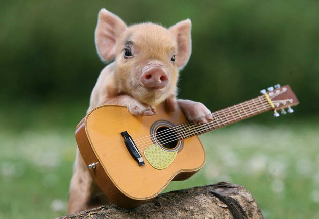 Cute-Pigs-Adorable-Pictures-5
