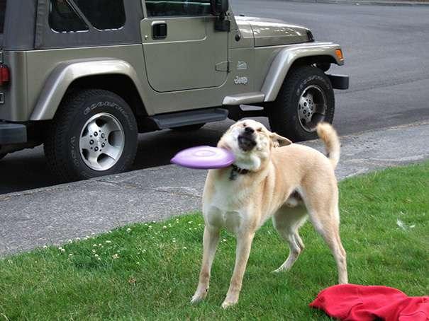 Dog-Fails-1