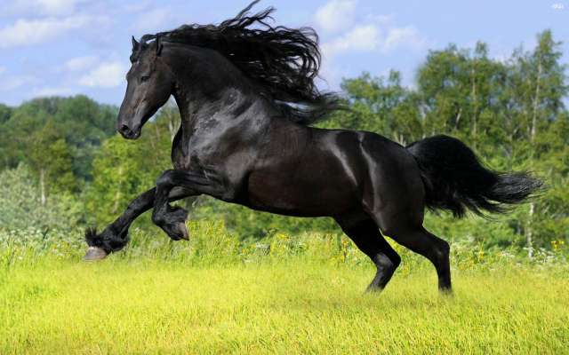 Top 10 most beautiful animals in the world wild domestic animals beautiful animal stallion voltagebd Choice Image