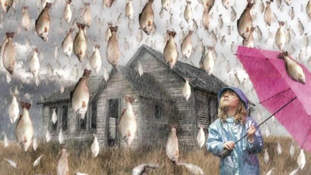 Falling-Fish