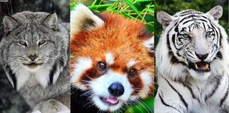 Top 10 Most Beautiful Animals